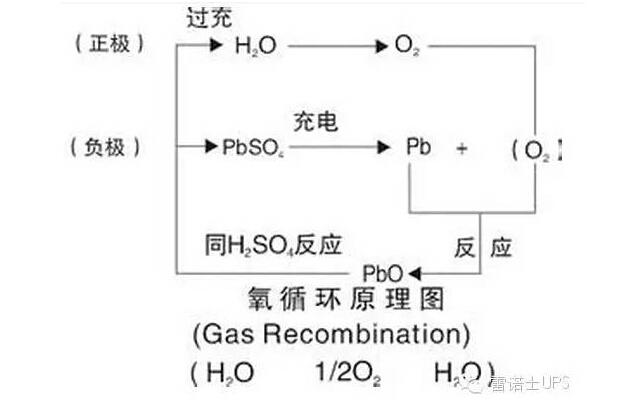 氧循環圖.jpg
